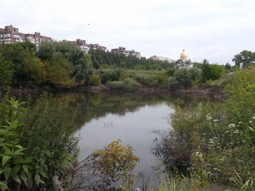 Сморід, величезна трава і … озеро – бомба повільної дії схована у Тернополі на вулиці Галицькій (фото, відео) (фото) - фото 4