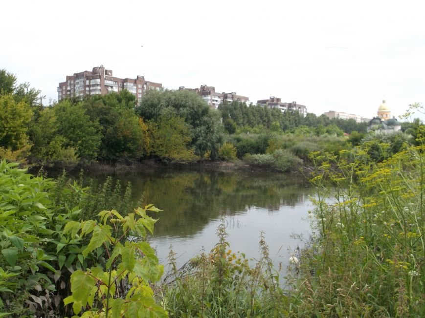 Сморід, величезна трава і … озеро – бомба повільної дії схована у Тернополі на вулиці Галицькій (фото, відео) (фото) - фото 3