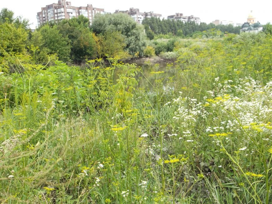 Сморід, величезна трава і … озеро – бомба повільної дії схована у Тернополі на вулиці Галицькій (фото, відео) (фото) - фото 1