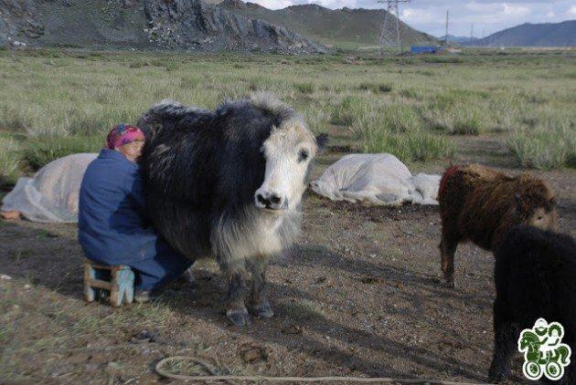 монголия21