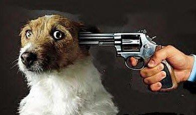 shootingdog_137568406467