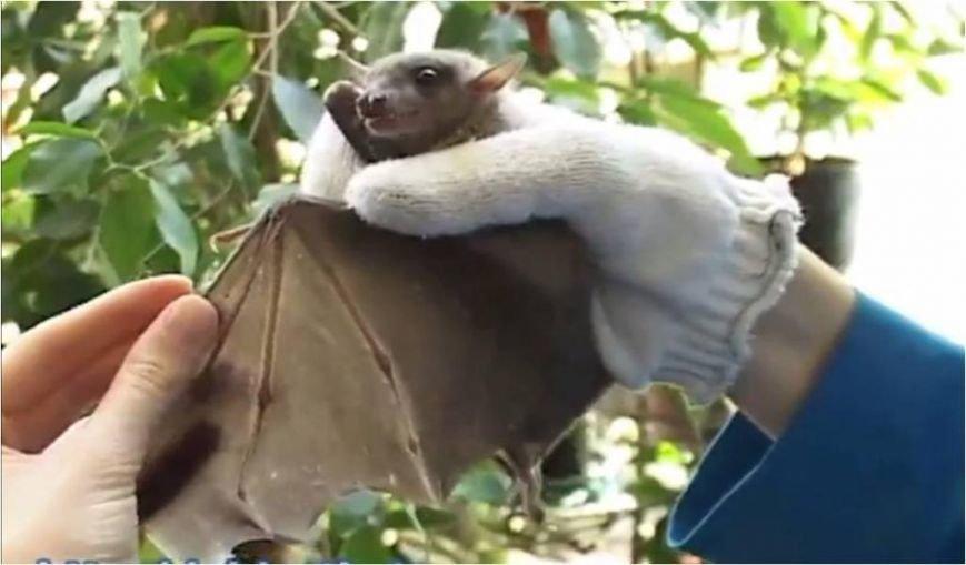 Bat2_1380786278