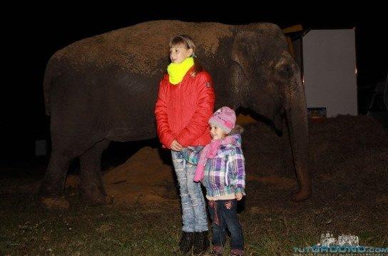гродно_слоны_2