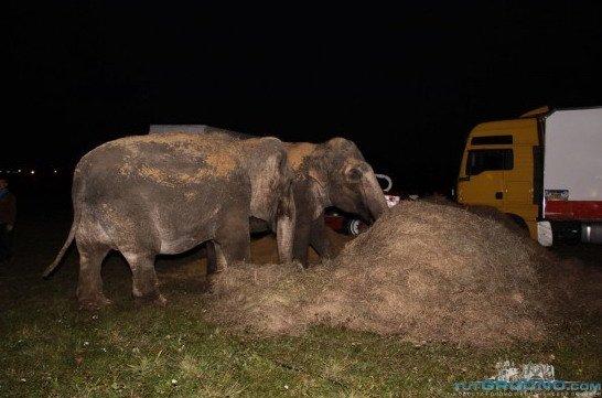 гродно_слоны_3