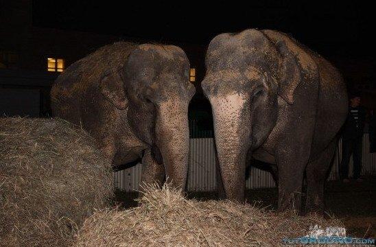 гродно_слоны_4