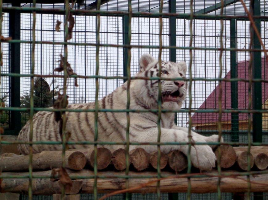 В бердянском зоопарке «Сафари» появился первый легальный гепард на Украине (ФОТО), фото-5