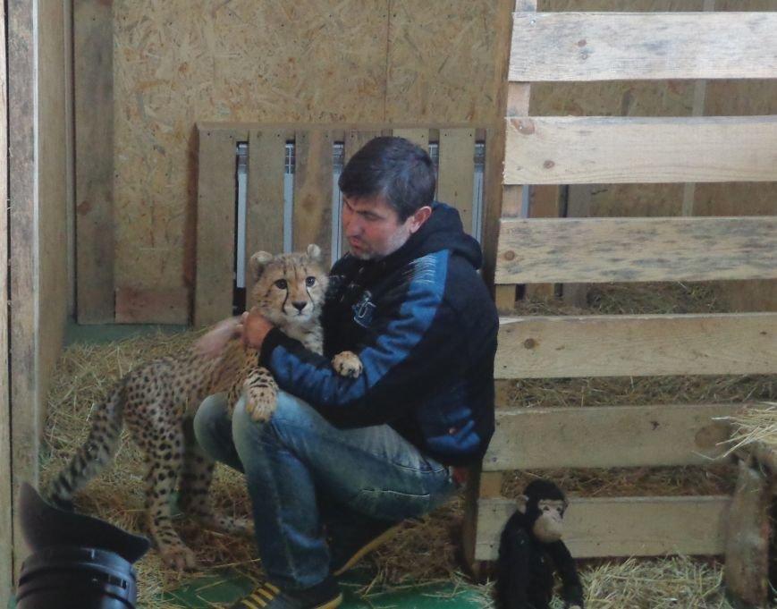 В бердянском зоопарке «Сафари» появился первый легальный гепард на Украине (ФОТО), фото-2