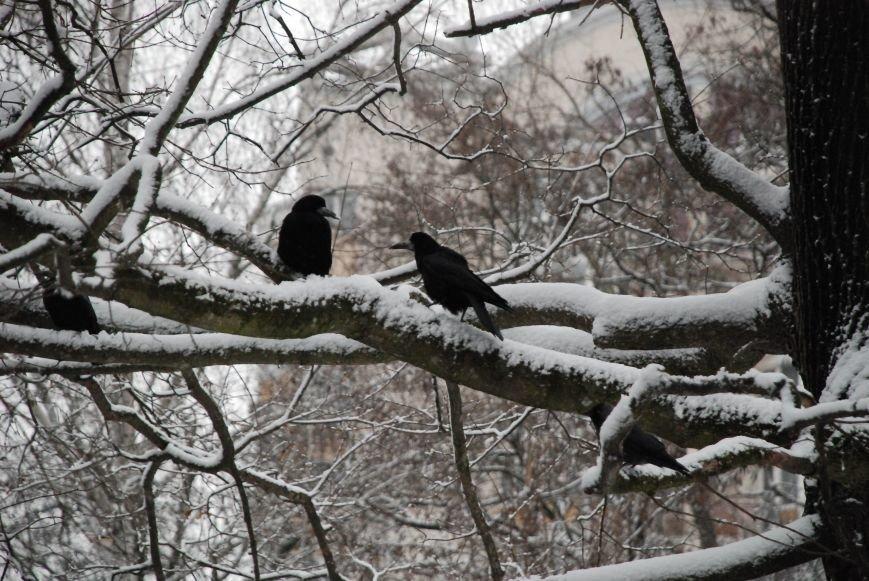 А в Чернигове - зима! (ФОТО), фото-15