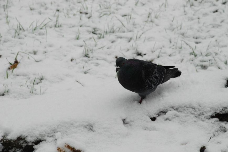 А в Чернигове - зима! (ФОТО), фото-3