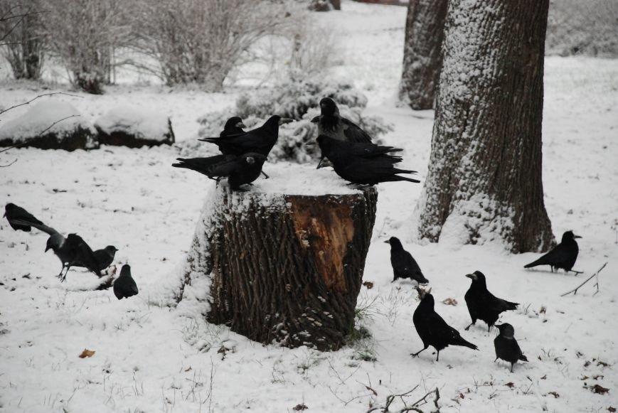 А в Чернигове - зима! (ФОТО), фото-14