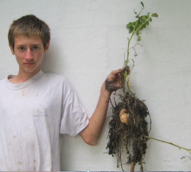 с картошкой 2011 -2(вариант 3)