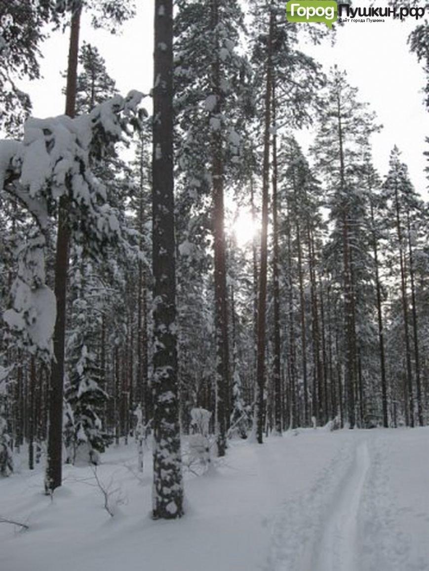 лыжные трассы в Пушкине и Пушкинском районе