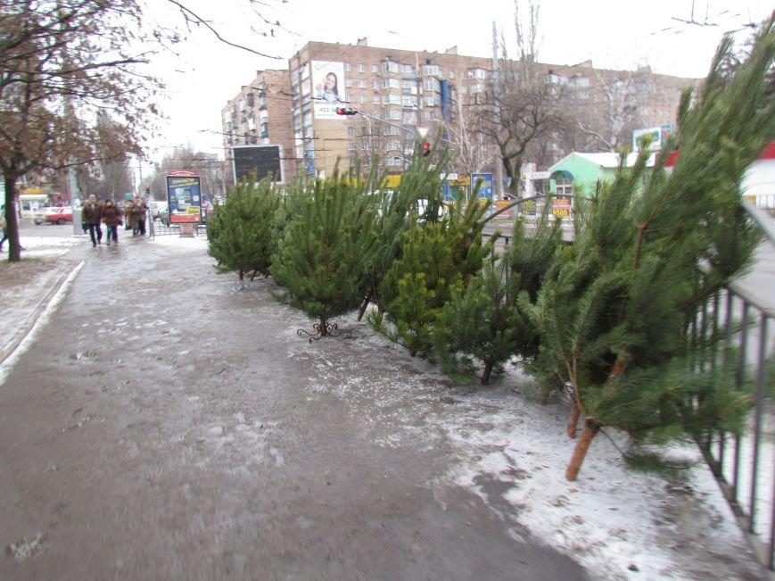 В Мариуполе новогодними елками торгуют по 100 грн. за штуку (ФОТОФАКТ), фото-1