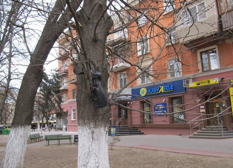 сапог на дереве