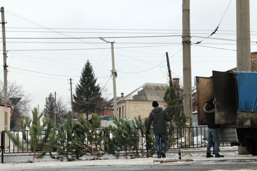 ФОТОФАКТ: На артемовской «Долине роз» вандалы спилили ели, а на бульваре незаконно работает елочный базар, фото-2