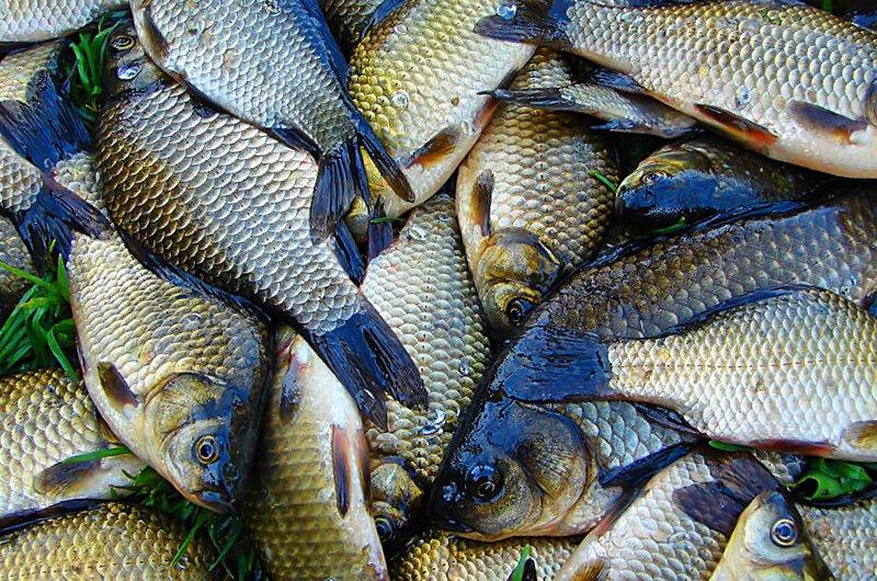 How much is the fish? В Луганске прошла Новогодняя ярмарка (ФОТО), фото-7