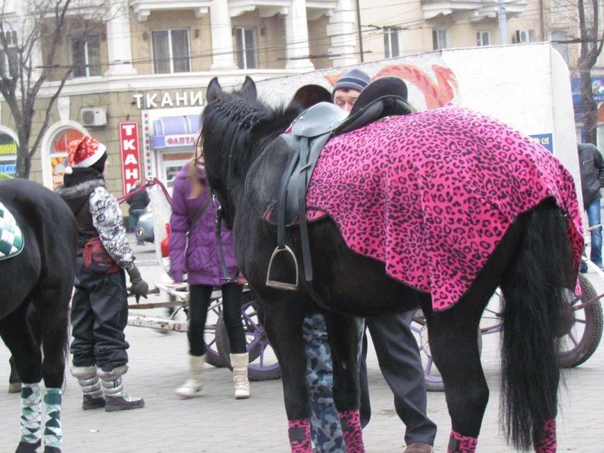 Символ Нового года мариупольский конь Тарзан не буйный и любит трудиться (ФОТО), фото-3