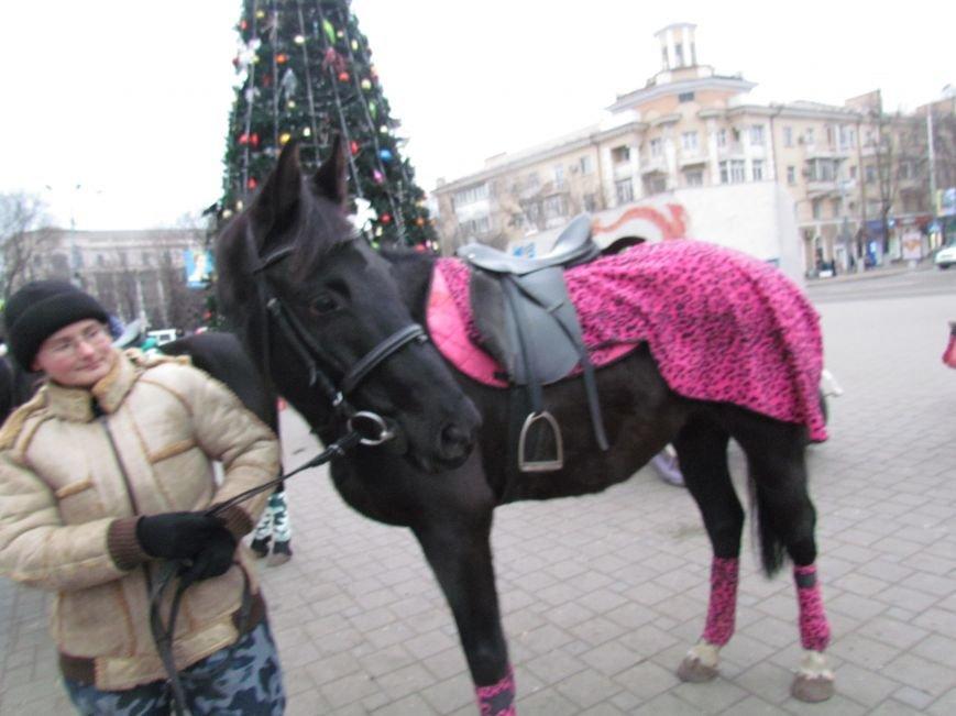 Символ Нового года мариупольский конь Тарзан не буйный и любит трудиться (ФОТО), фото-1