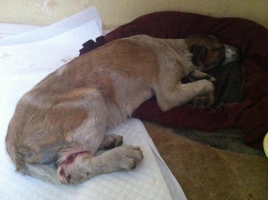 В Горловке неизвестные расстреляли стаю собак, фото-1