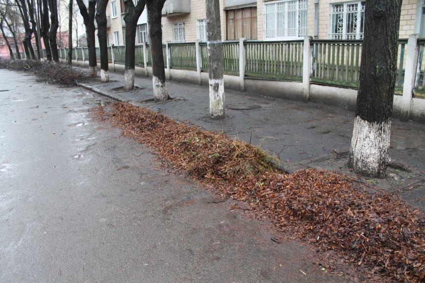 Сумчане требуют от «Сумыжилья» наконец-то вывезти опавшую листву (ФОТО), фото-1
