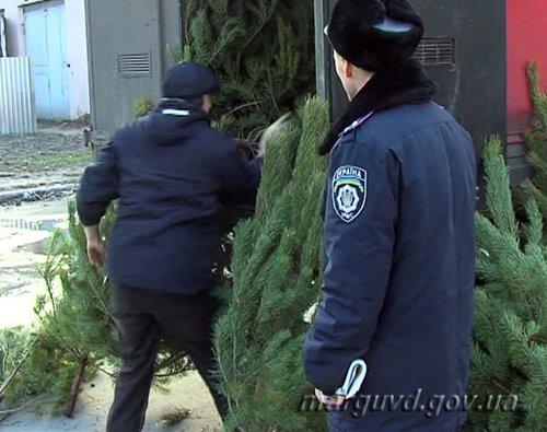 Мариупольские милиционеры привлекли к ответственности нелегальных торговцев хвойными деревьями (ФОТО), фото-2