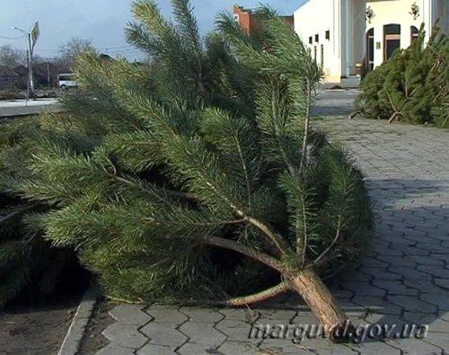 Мариупольские милиционеры привлекли к ответственности нелегальных торговцев хвойными деревьями (ФОТО), фото-1