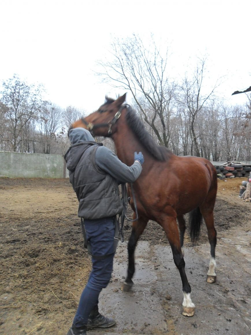 Как красноармейские лошади отметили год -тезку, фото-2