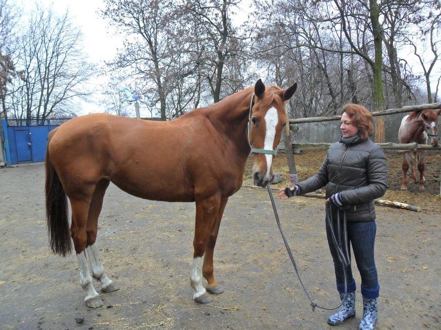 Как красноармейские лошади отметили год -тезку, фото-1
