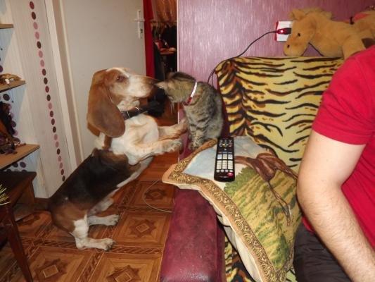 Мариупольский бассет Сэм обрел свое счастье в Касьяновке (ФОТО), фото-4
