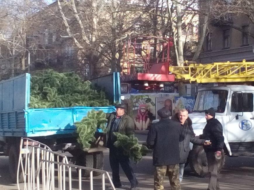 Праздники закончились — в Николаеве собирают главную городскую елку (ФОТО), фото-2