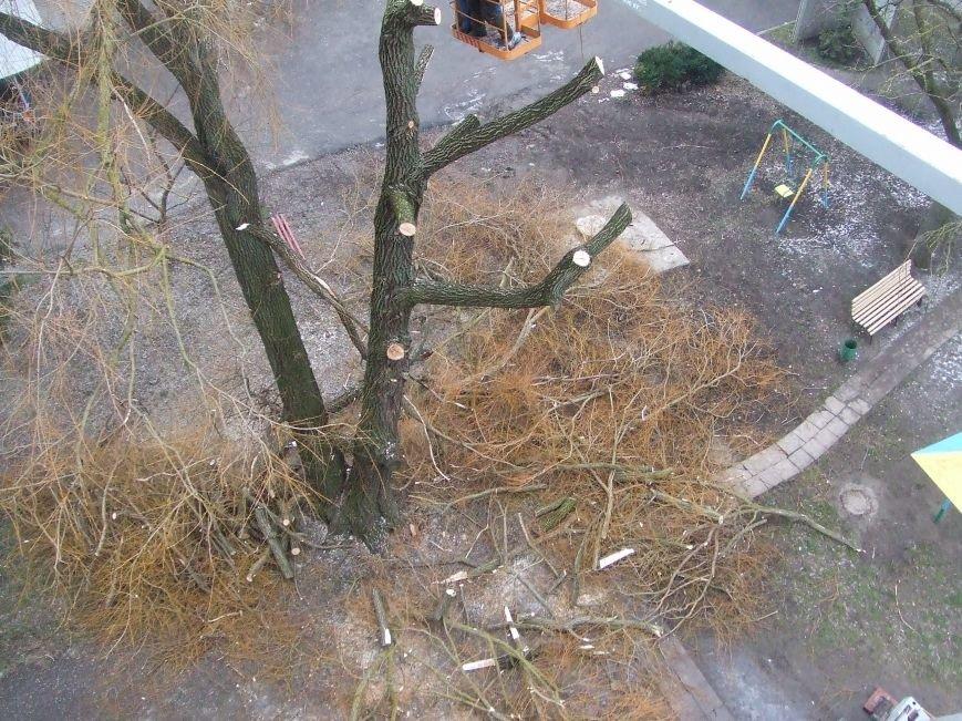 Тернополяни продовжують скаржитись на винищення зелених насаджень в місті (фото), фото-2