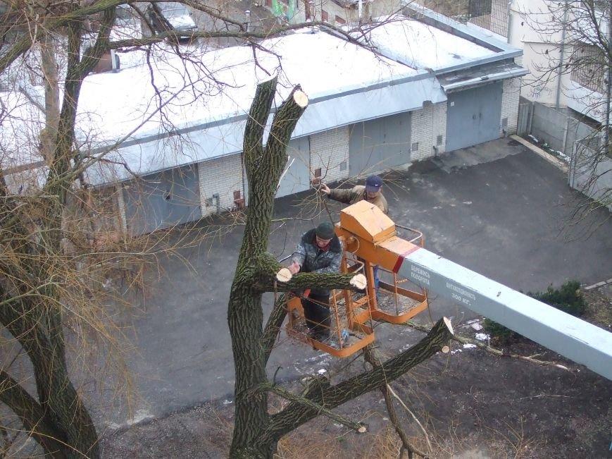 Тернополяни продовжують скаржитись на винищення зелених насаджень в місті (фото), фото-1