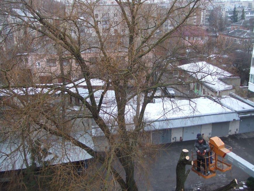 Тернополяни продовжують скаржитись на винищення зелених насаджень в місті (фото), фото-3