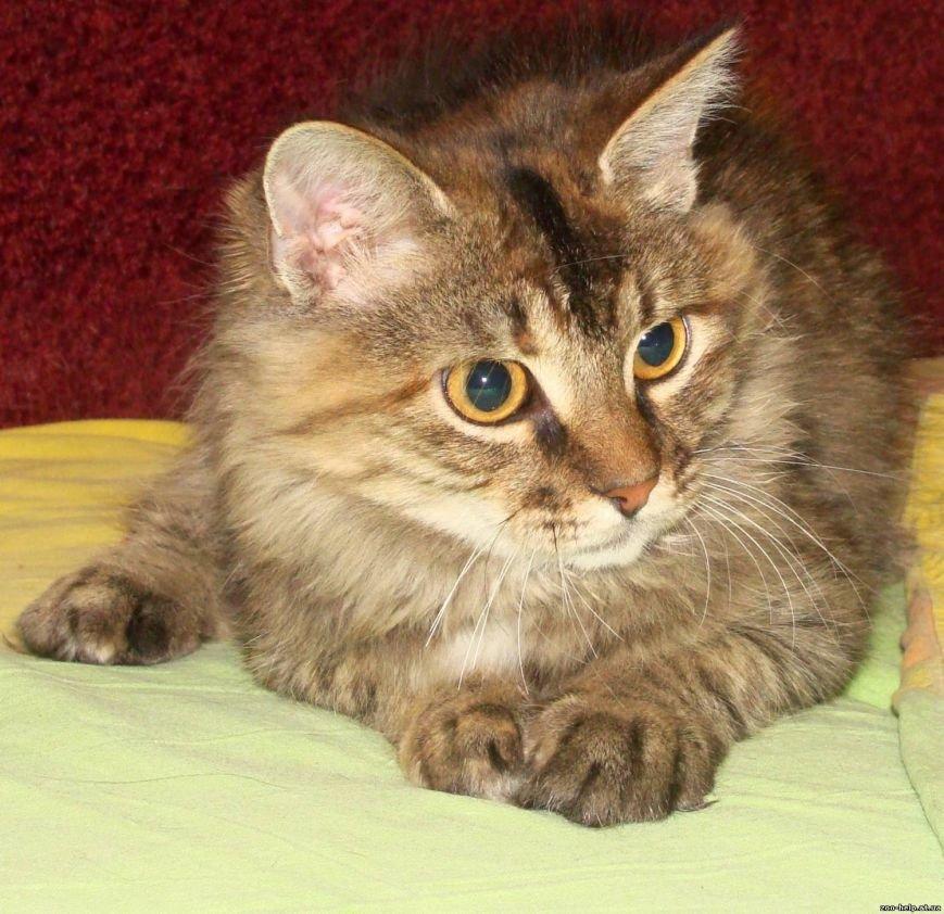 Мариупольские зоозащитники превратили котенка со сломанной челюстью в необыкновенно красивую кошку (ФОТО), фото-3