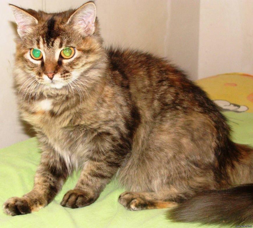 Мариупольские зоозащитники превратили котенка со сломанной челюстью в необыкновенно красивую кошку (ФОТО), фото-5