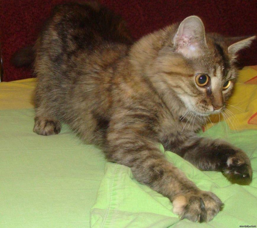 Мариупольские зоозащитники превратили котенка со сломанной челюстью в необыкновенно красивую кошку (ФОТО), фото-4