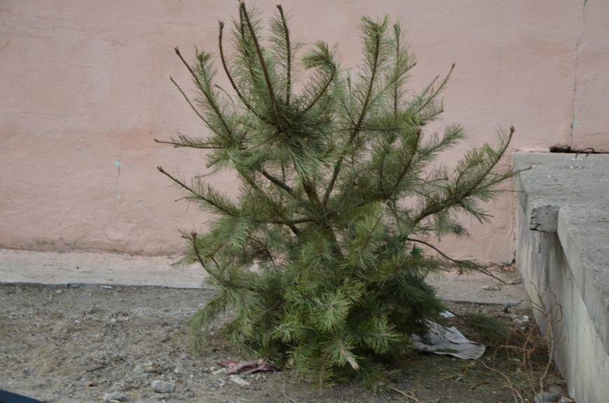 В Мариуполе выброшенные елки превратились в горы мусора (Фотофакт), фото-5