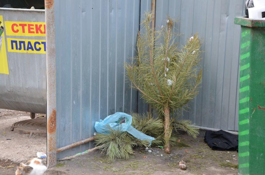 В Мариуполе выброшенные елки превратились в горы мусора (Фотофакт), фото-6