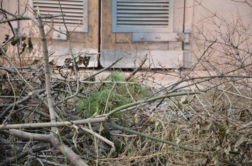 В Мариуполе выброшенные елки превратились в горы мусора (Фотофакт), фото-3