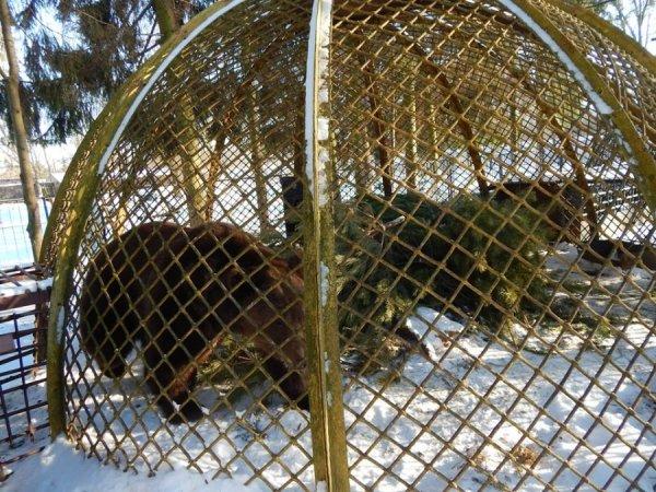 зима в зоопарке8