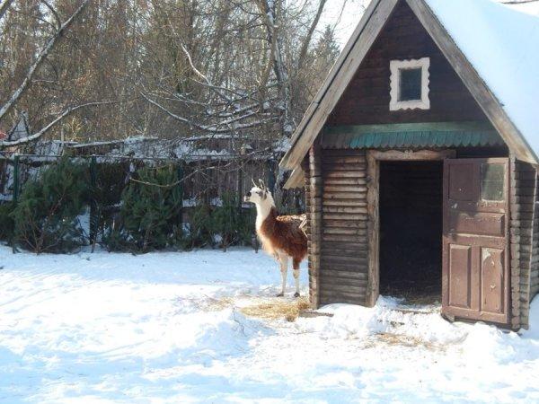 зима в зоопарке7