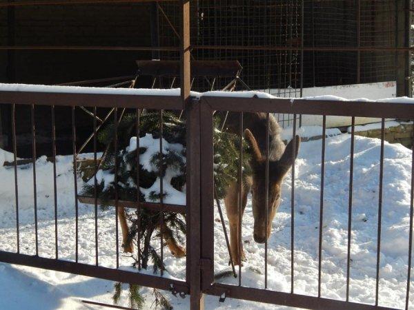 зима в зоопарке5