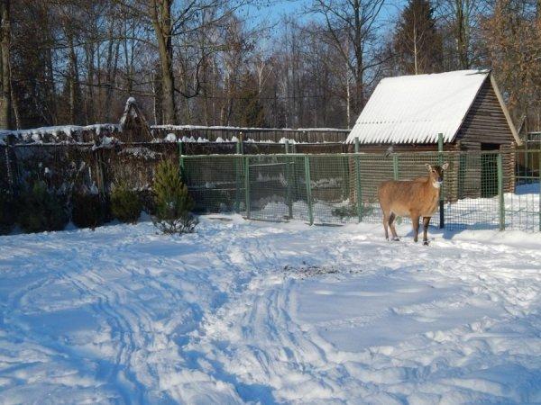 зима в зоопарке11