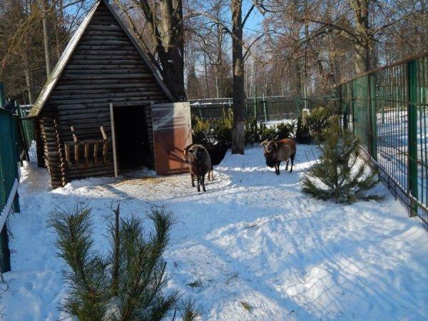 зима в зоопарке4