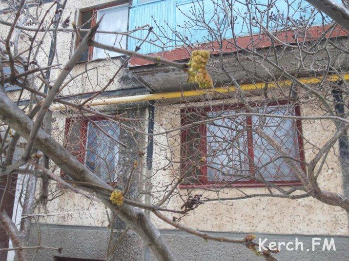 ФОТОФАКТ: В Крыму расцвела и обледенела сирень, фото-1