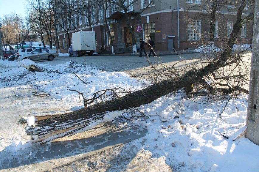 Загадочная авария в центре Сум: сломано дерево и столб (ФОТО), фото-1