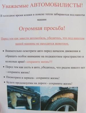 Черниговцев призывают не убивать кошек, фото-1