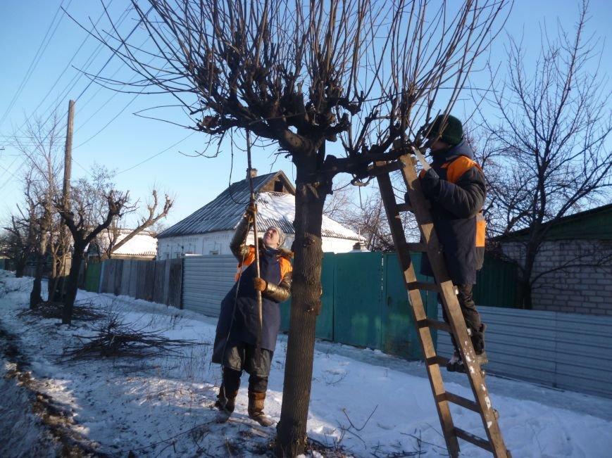 В Красноармейске «подстригли» клены (Фото), фото-3