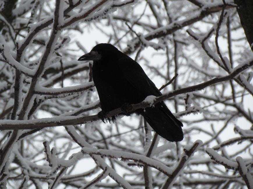 Мариупольцы наслаждаются последними днями зимней сказки (ФОТО), фото-15