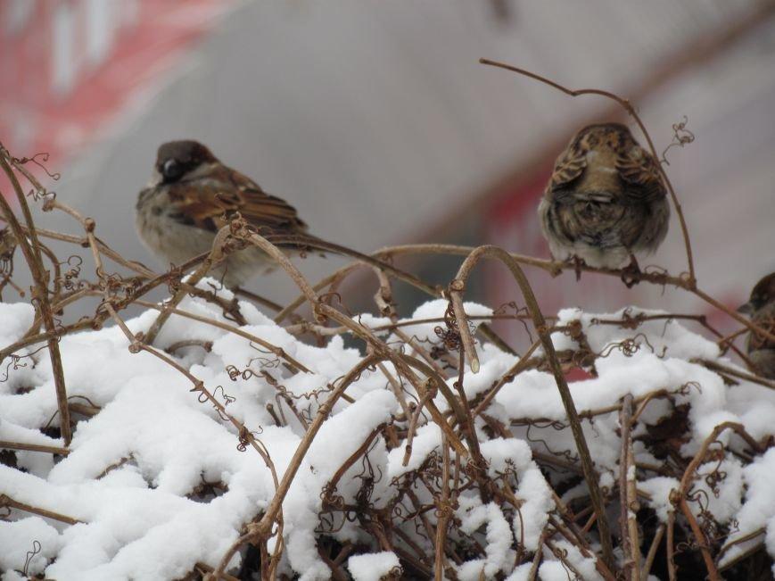 Мариупольцы наслаждаются последними днями зимней сказки (ФОТО), фото-12